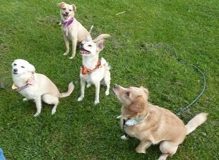 Princess, Pipa, Annie, Ilo